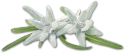 edelweiss image for footer